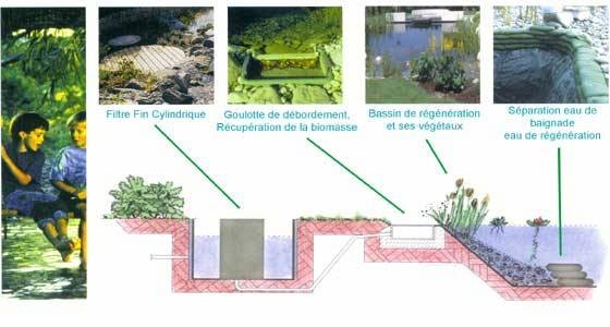 Cjconcept  Services  Bassin Naturel Rosenau